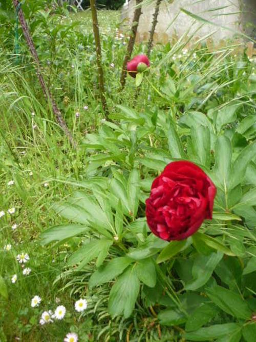 Les petites fleurs du moment - suite -