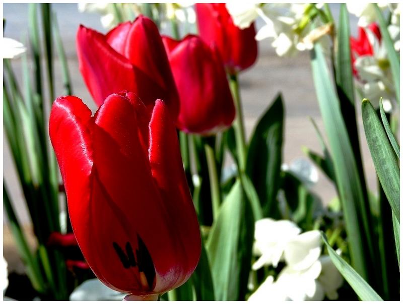 Metz / Loin de janvier le temps des fleurs...