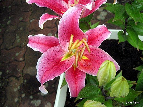 Fleurs-4127-1.JPG