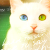 [inédite] - Big série de chats