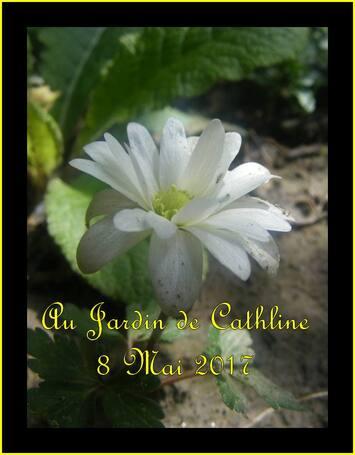 Jardiner avec la Lune du 21 au 31 Mai