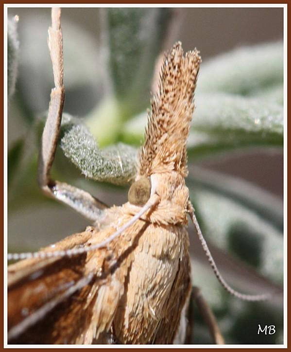 Insectes 01 3709a