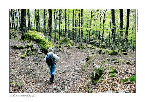 Vallée perdue des Monts du Sancy