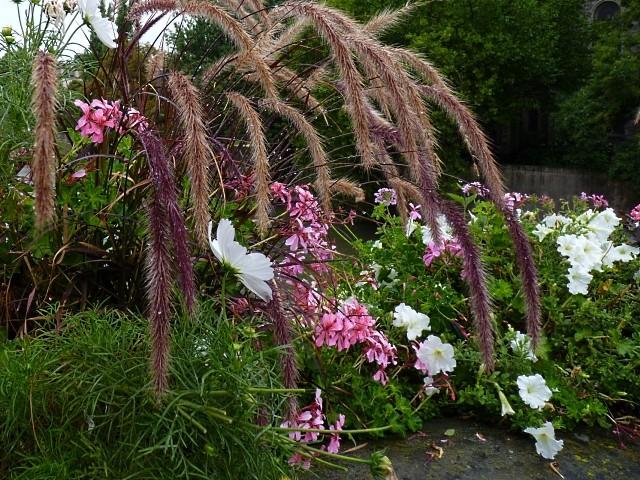 Metz en fleurs 7 mp1357 2011