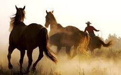 photo de chevaux