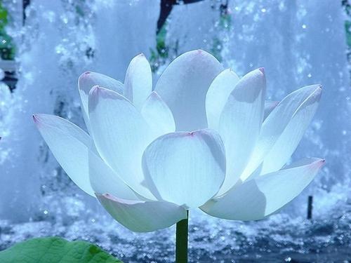 http://www.memoclic.com/2-555-1024x768/fond-ecran-fleur-blanche.jpg