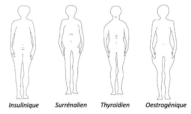 Profils hormonaux