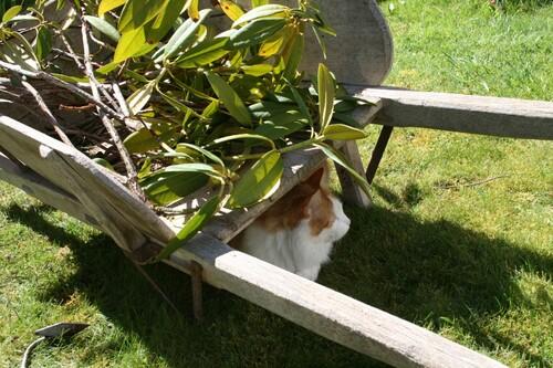 Dimanche au jardin .
