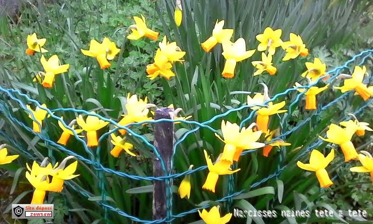 un petit tour dans mon jardin ou il commence a y avoir des plantes un petit tour dans mon jardin ou il commence a y avoir des plantes