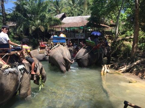 Les promenades à dos d'éléphant