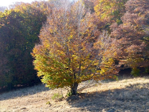 L'automne à l'Aigoual