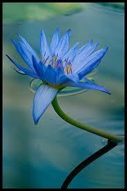 Ca C'Est Une Belle Fleur