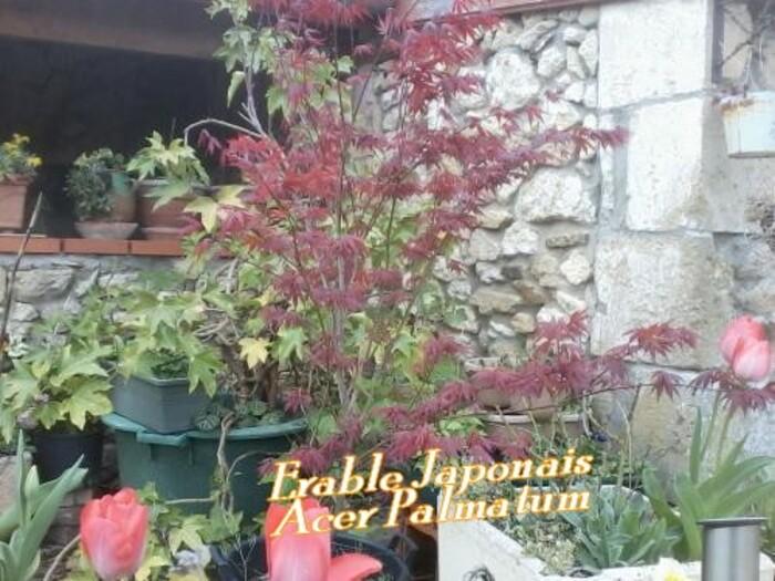 les plantes dans mon jardins et leurs noms