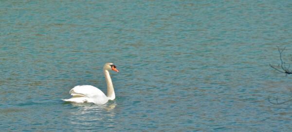Lac-d-Artix 8334