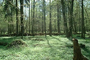 Poland Bialowieza - BPN-copie-1