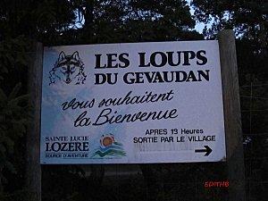 LOUPS GEVAUDAN 31-12-11 234