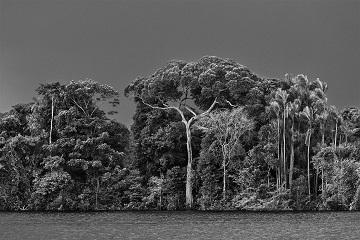 Amazonia ...