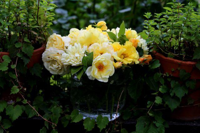 Overdose de roses (fin)