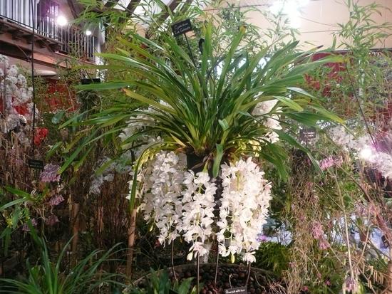 2013-Expo orchid Pont sainte Marie 011