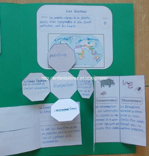Le monde des écosytèmes - Esteban et Marie