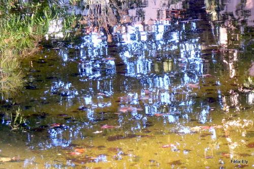 Des reflets dans l'eau