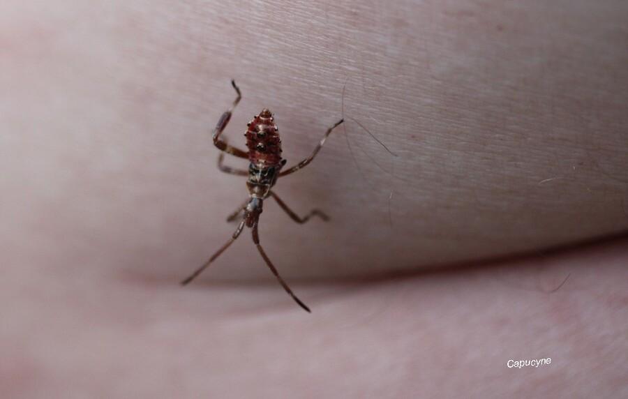 Insectes en visite