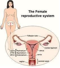Metode Alami Perapat Vagina