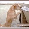 Bambou G 2