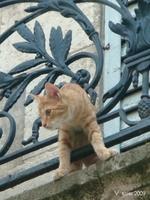 chat de narbonne