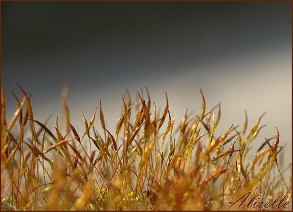 Mousse-caramel-1.jpg