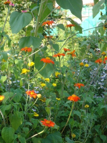 Giverny, le jardin de Monet 2