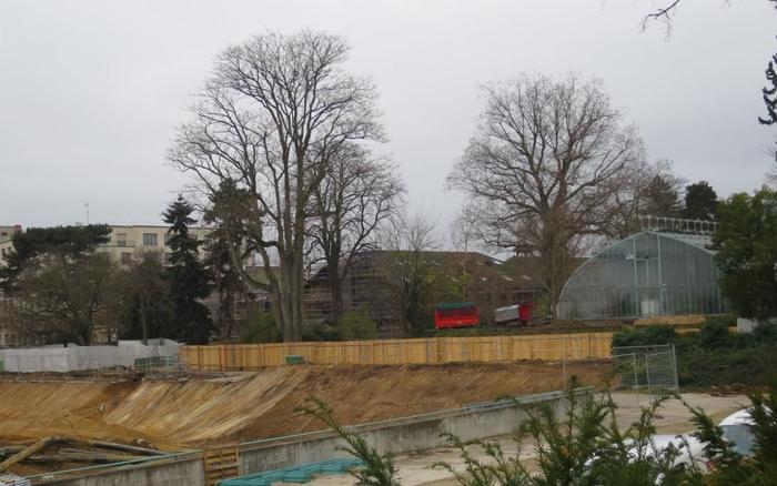 Les Serres d'Auteuil : Les travaux ont commencé !