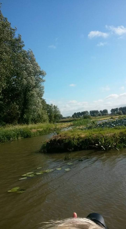 Marais audomarois ( Clairmarais )