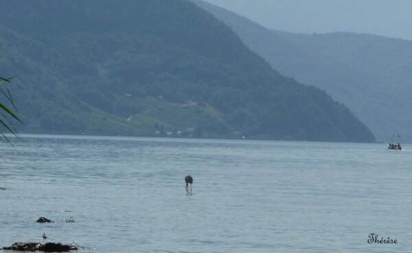 Lac du Bourget (21)