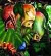 Animaux et Plantes insolites