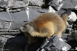 Marmottes et Marmottons 2015