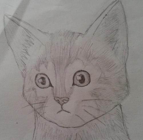 Chat au crayonné