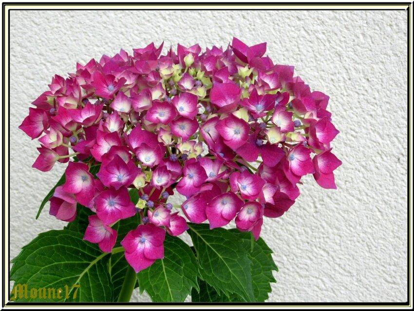 Dans le jardin, des fruits, des fleurs ..........