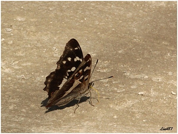 Papillons-2491-grand-mars.jpg