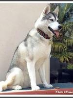 Leska (2 ans)