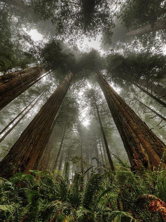 La beauté est partout dans la nature (31 Photos)