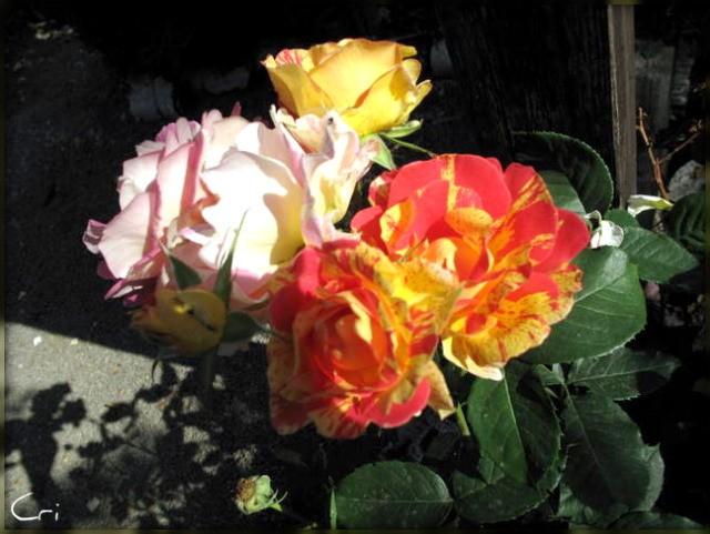 fleurs 4179-1