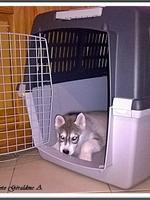 Louska (2 mois)