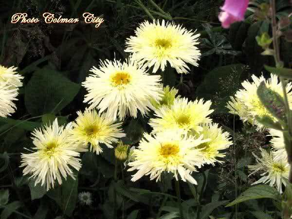 http://i56.tinypic.com/152euqr.jpg