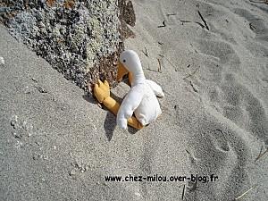 Bilo et Loba en Bretagne16