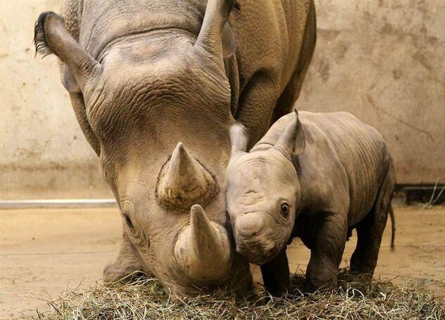 animal parents08 Funny: Animal parents