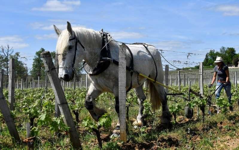 Dans le Haut-Rhin, le cheval Sésame au coeur d'une procédure judiciaire entre voisins