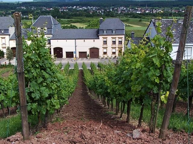 Vignoble Luxembourgeois 1 Marc de Metz 2011