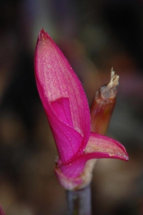 fleur-opoul-11-a-