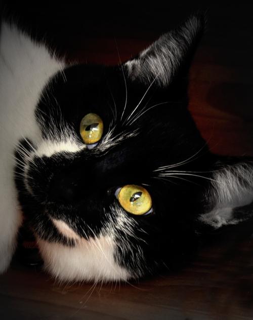 Petit chat...